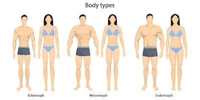 Tipos-de-cuerpo humano-endomorfo-ectomorfo-mesomorfo